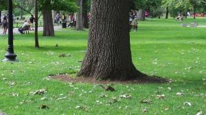 Der Eichhörnchen Park