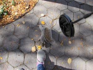 Zutrauliches Eichhörnchen!